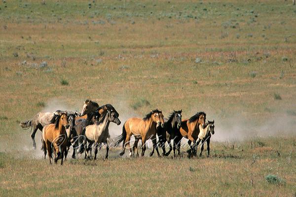 Kiger Mustang Band