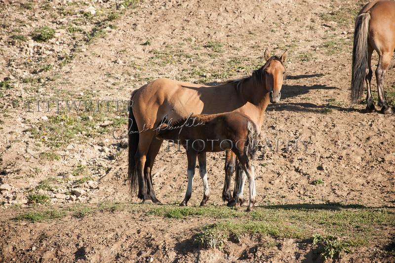 Skinny Mare, Fat Foal