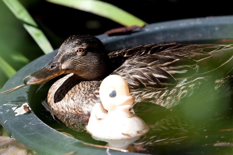 Rubber Duckie!