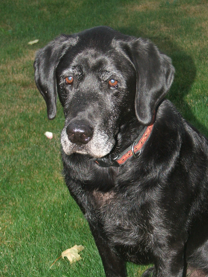 Sarge 10 years old - July 2005