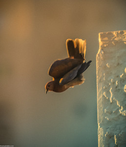 Fly Awayyyy
