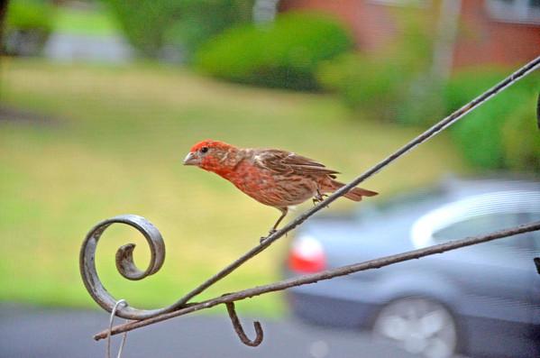 My Birdfeeder