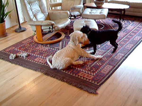 Django and Bandy at Play