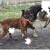 Brus and Carman Puzzled