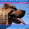 Bibi- The Superdog
