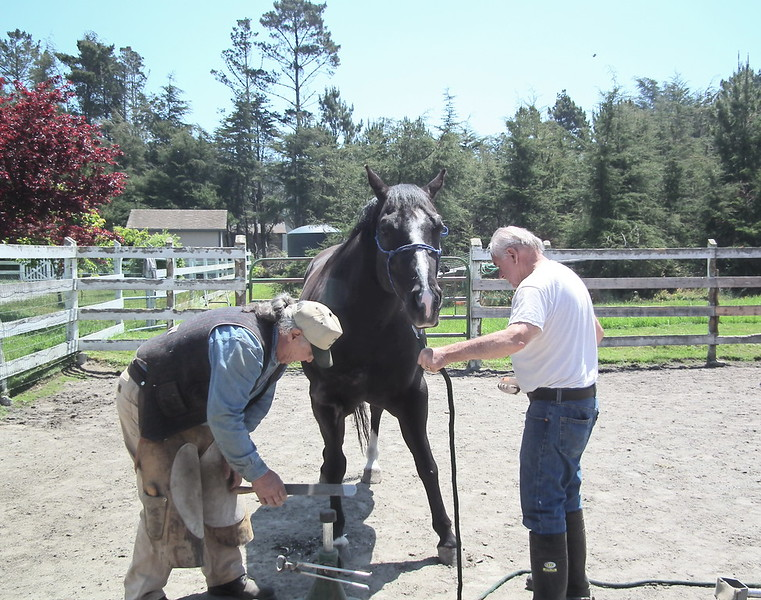 Our favorite farrier, Clare St. Arnaud, trimming D'Artagnan's hooves with a little help from Gale.