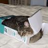 Sam-In-The-Box