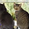 Window_Cats_27
