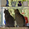 Window_Cats_25
