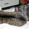 Eegie always wants a pillow