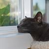 Eegie on Window