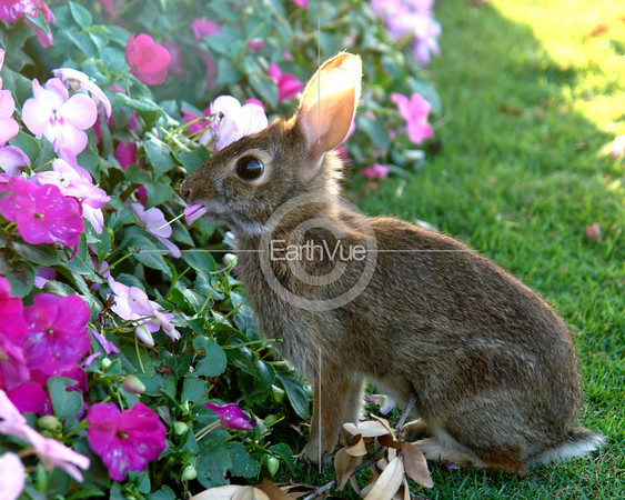 BUNNY EATING FLOWERS!