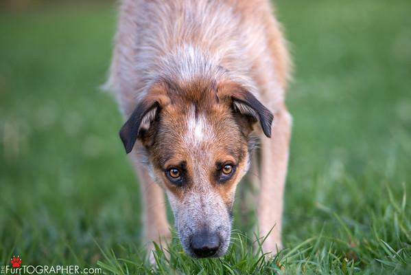 Ollie (10)