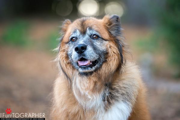 Tucker (13)