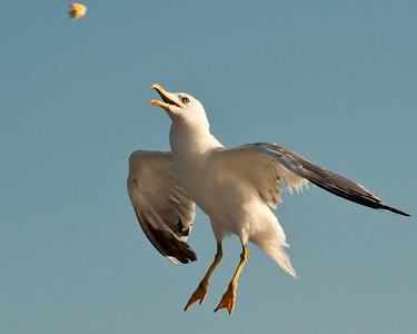 aerial acrobat - greece