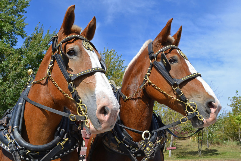 The Team<br /> Darcy and Kelly are proud members of the Northern MN Draft Horse Association. (NMDHA)