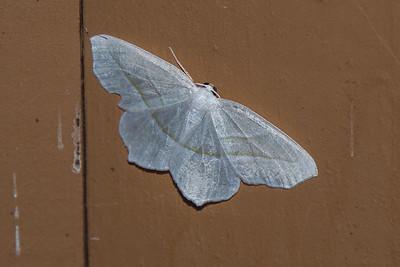 Moth-7240049