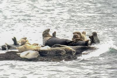 Seals-0147