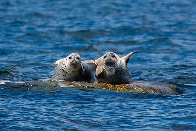 Seals-1200