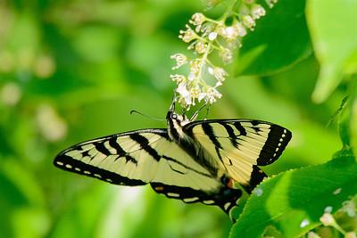 Pollination-4284