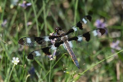 Tatamagouche birds and bugs-0988