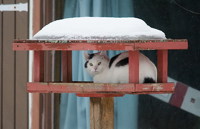 Cat in feeder-5693