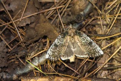 Moth-7240041