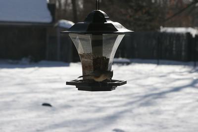 NYS Winter Birds