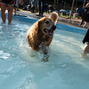 Dog Pool Party - 2018