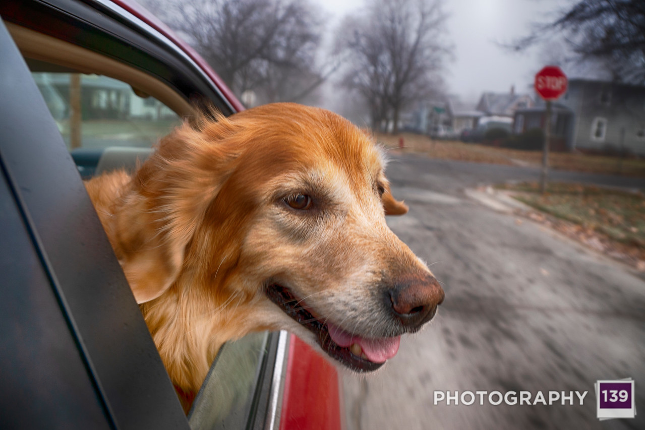Naima enjoying a car ride.