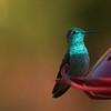 Reflective hummer