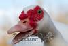 10-14-2011-Nathan_Ducks-1108