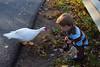 10-14-2011-Nathan_Ducks-1252
