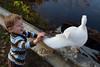 10-14-2011-Nathan_Ducks-1124
