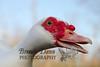 10-14-2011-Nathan_Ducks-1112