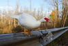 10-14-2011-Nathan_Ducks-1103