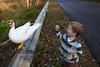 10-14-2011-Nathan_Ducks-1128