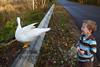 10-14-2011-Nathan_Ducks-1126