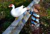 10-14-2011-Nathan_Ducks-1171