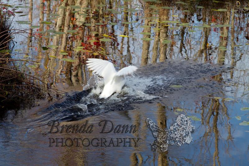 10-14-2011-Nathan_Ducks-1147