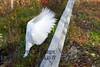 10-14-2011-Nathan_Ducks-1165-2