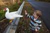 10-14-2011-Nathan_Ducks-1127