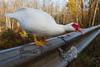 10-14-2011-Nathan_Ducks-1102-2