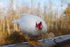 10-14-2011-Nathan_Ducks-1105