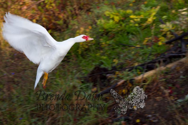 10-14-2011-Nathan_Ducks-1164