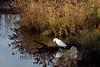 10-14-2011-Nathan_Ducks-1261