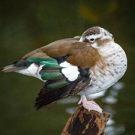 National Aviary 2017 - Pittsburgh