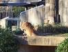 I am lioness, hear me roar.  Meow.