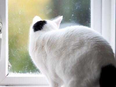 100404_Nat's-Cats_19