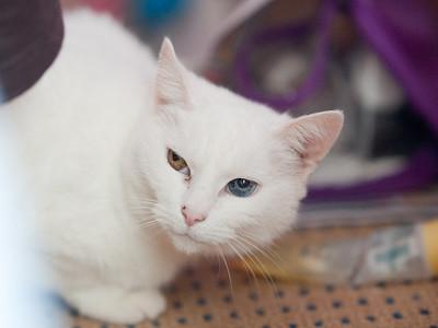 100404_Nat's-Cats_35